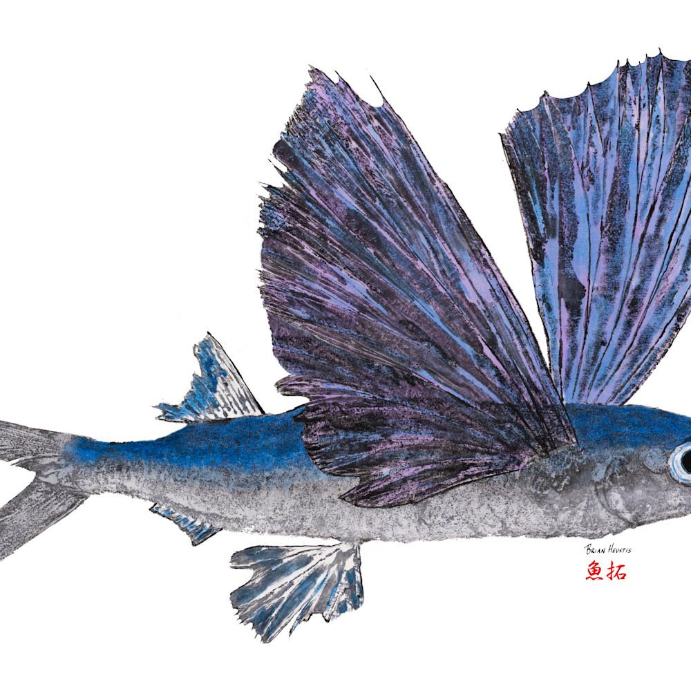 Flying fish asf k20jkh