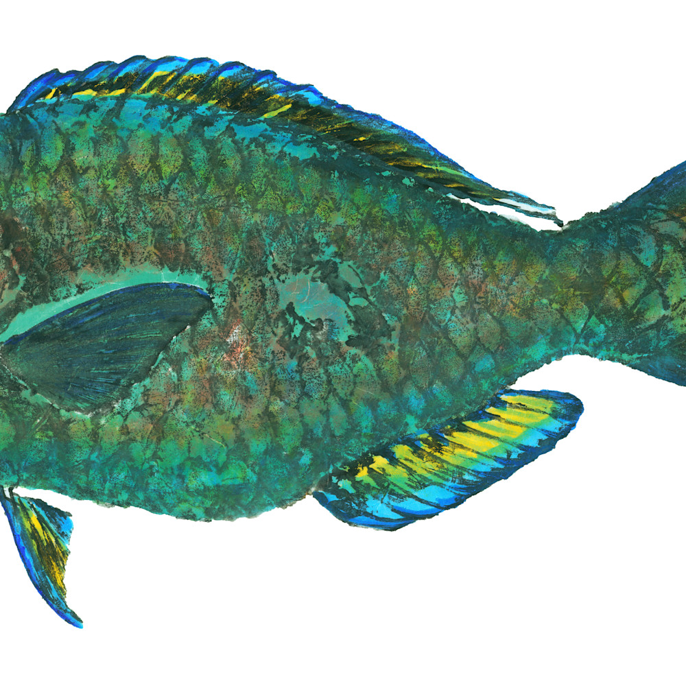 Parrotfish male asf q9yhw5