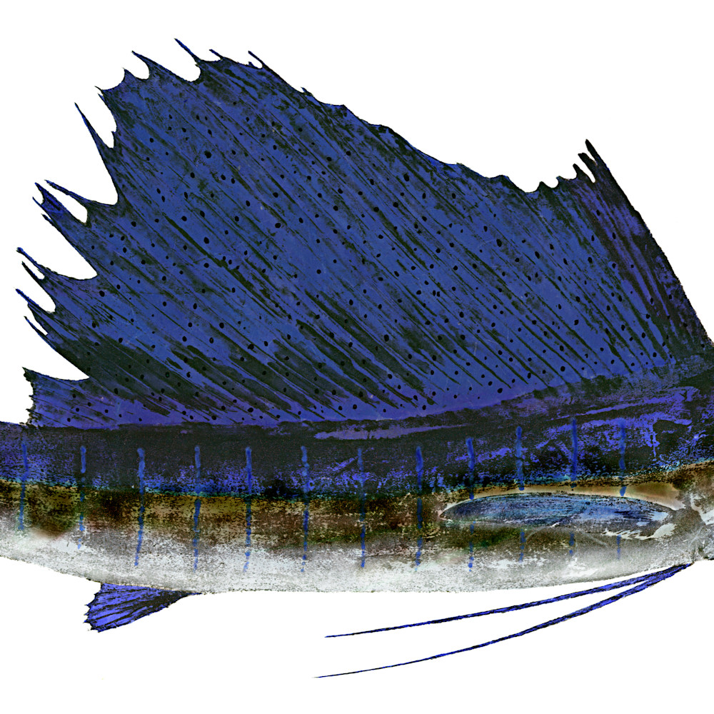 Sailfish bent  asf dtb1ta