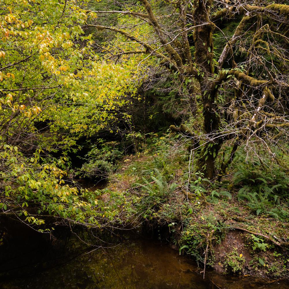 Autumn forest smith creek brooklyn washington 2020 fkmayd