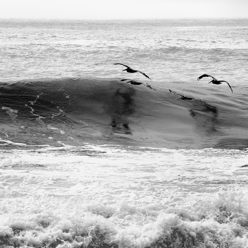 Two pelicans skimming the waves bw suhtg9