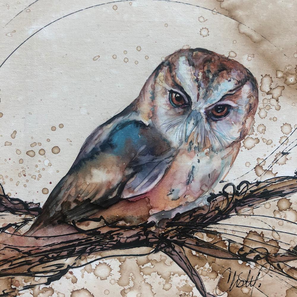 Barn owl w6o5k8