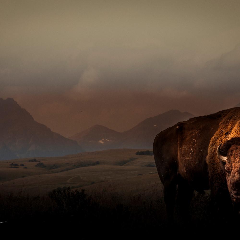 Buffalo morning h5ggkk