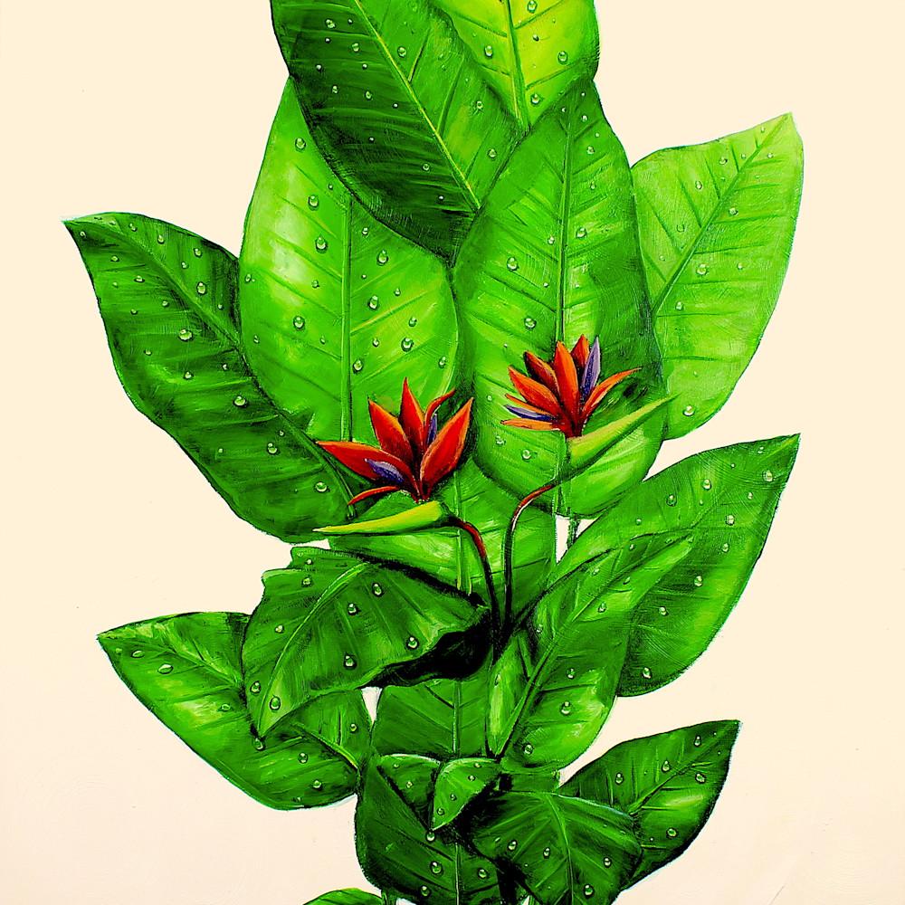 Birds of paradise plant jjbcya