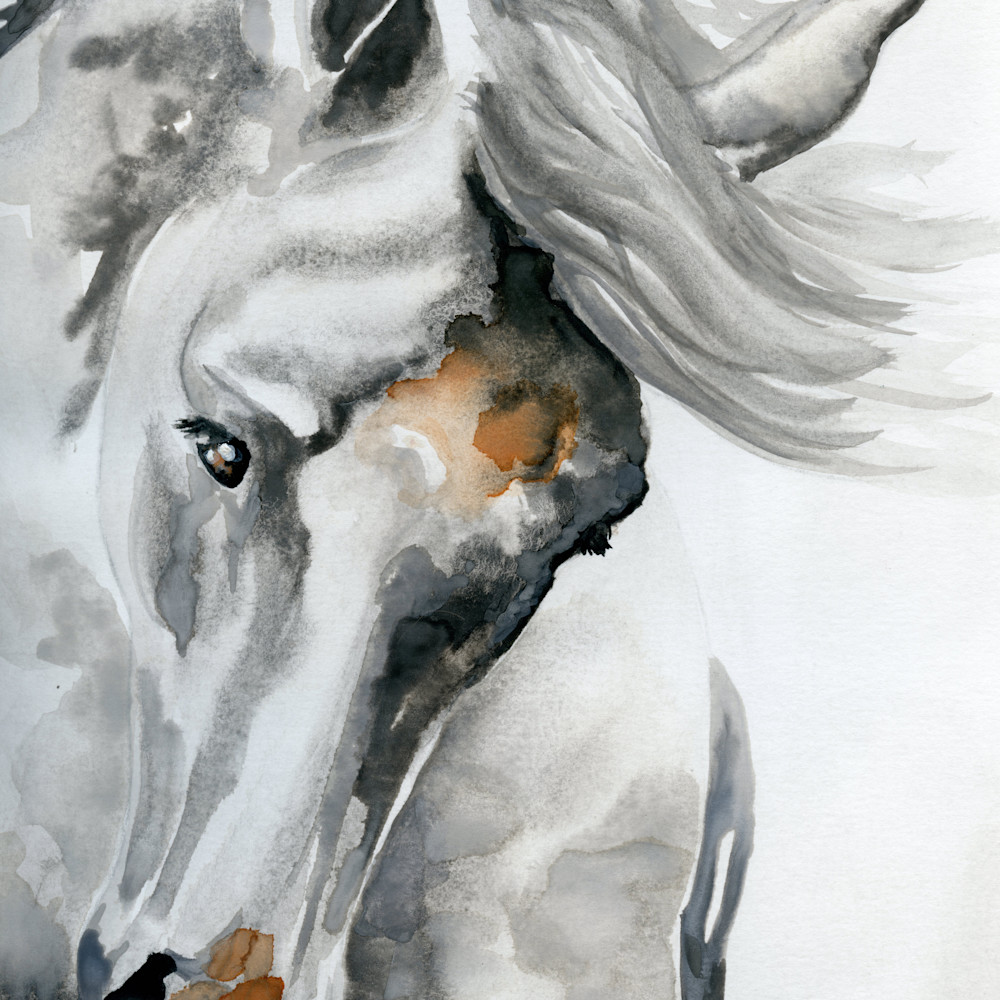 Large  tossing horse head 9x12 hufcr5