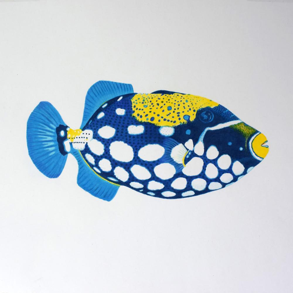 Trigger fish no 1 open edition print sfydex