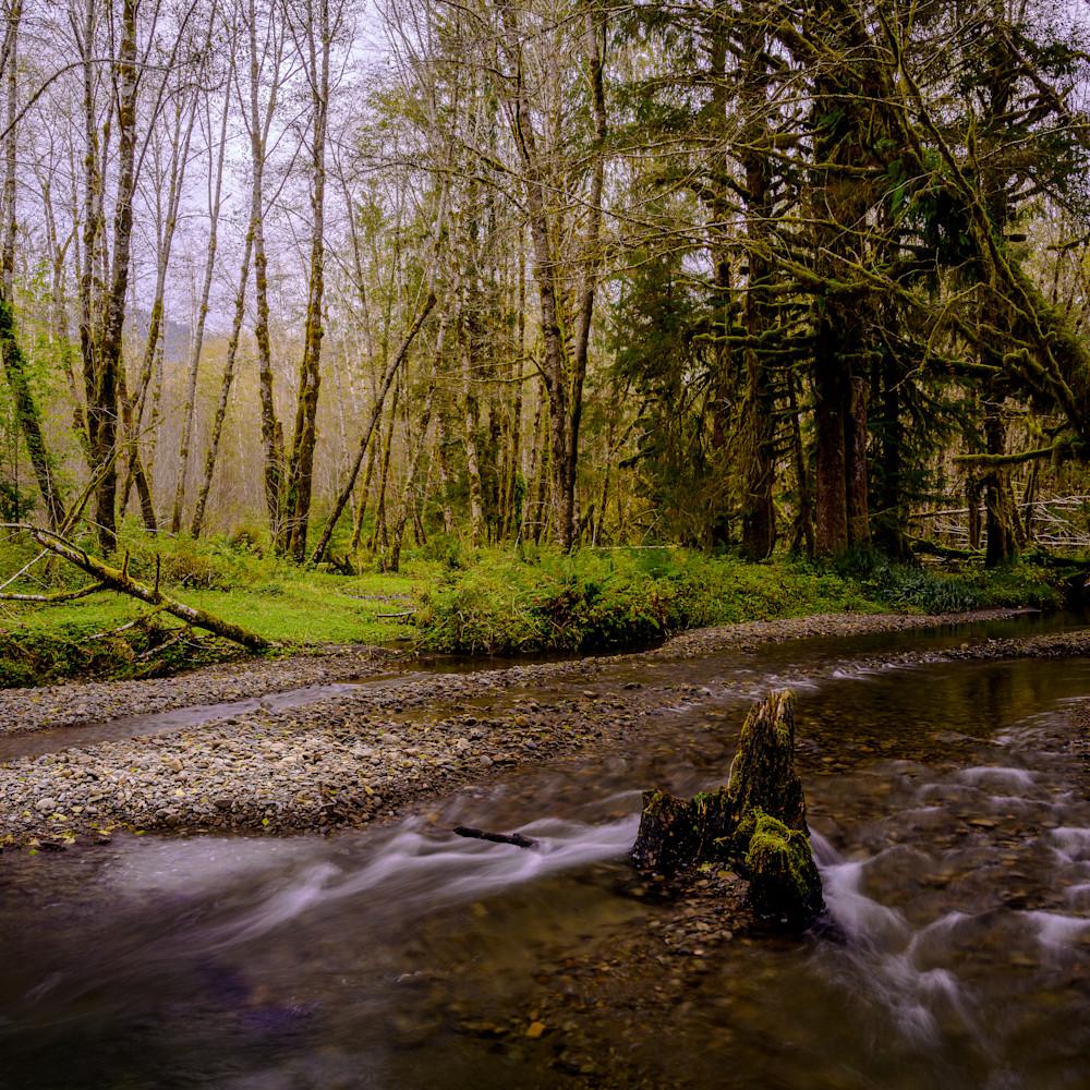 Creek quinault river vally washington 2020 wkjo2n