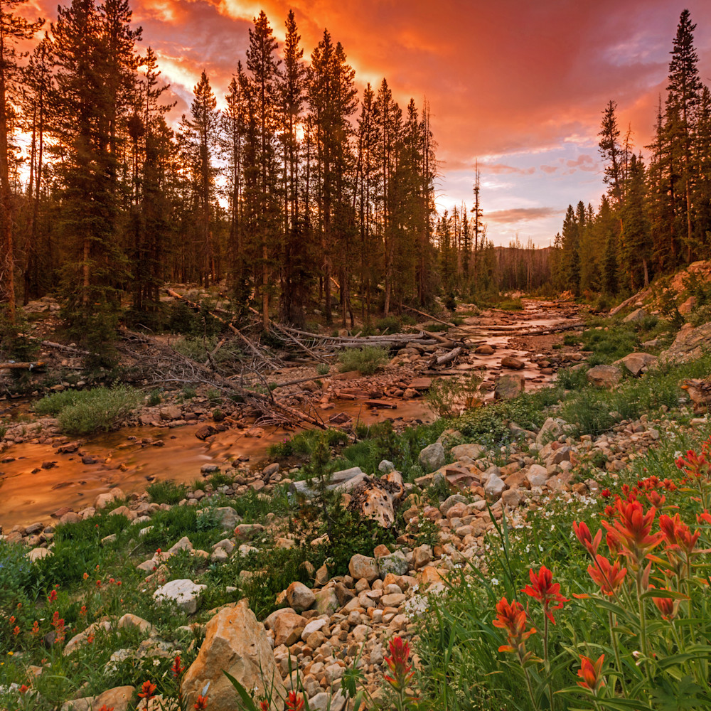 Wildflowers along the provo river uinta s asf an90wt