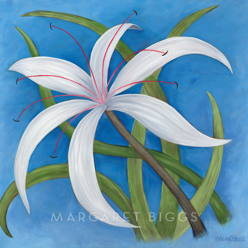 Spider lily oswrd0