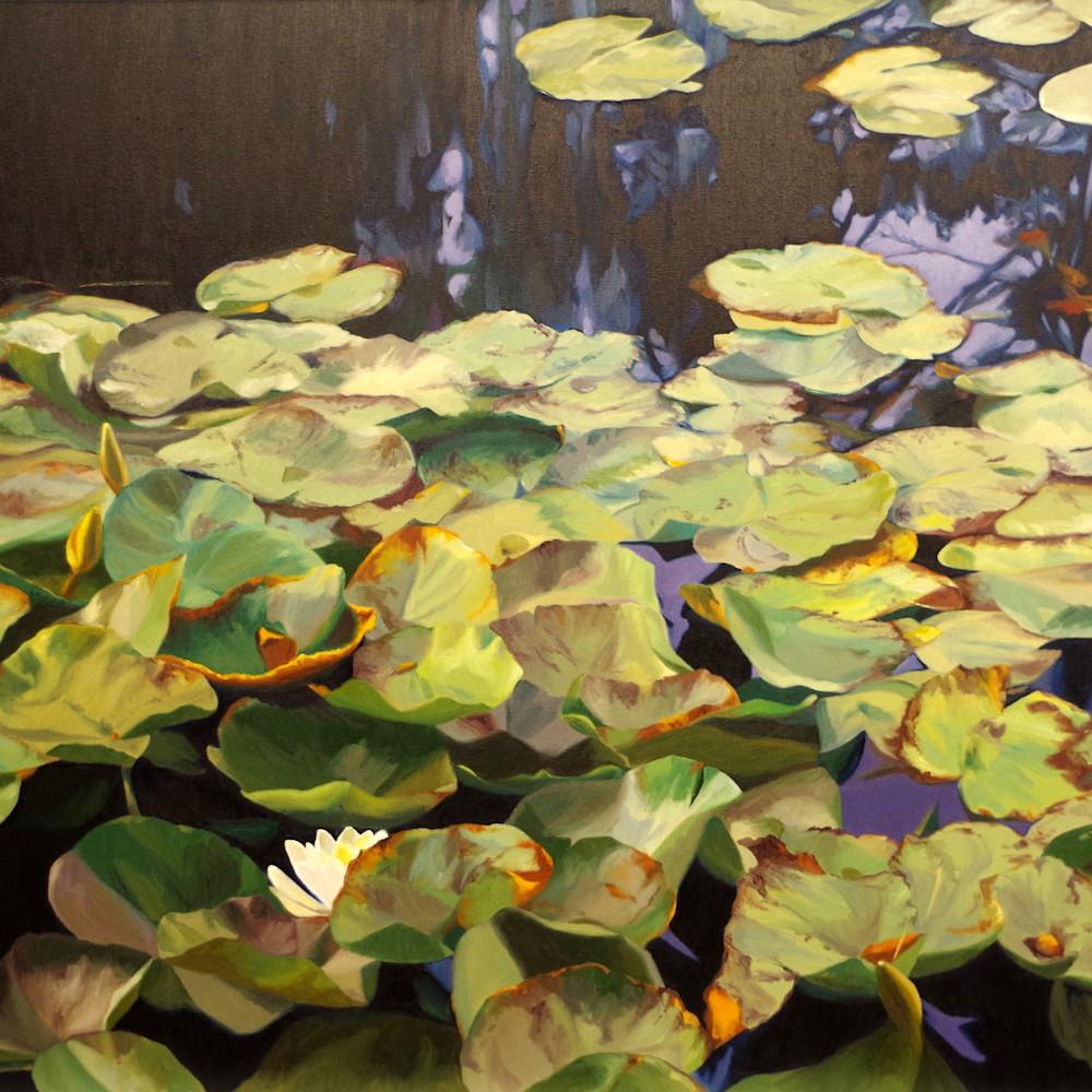 Pond garden in fall dr80ld
