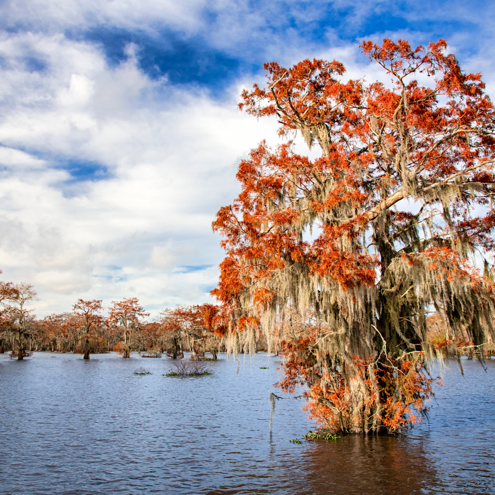 Andy crawford photography swamp colors efwsio