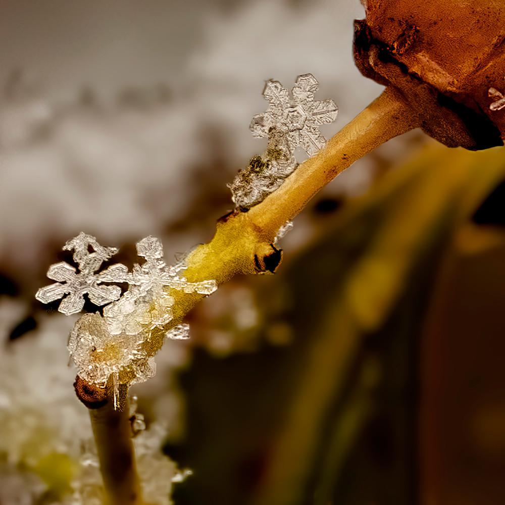 Snow flakes 9007vgcc fss udha1f
