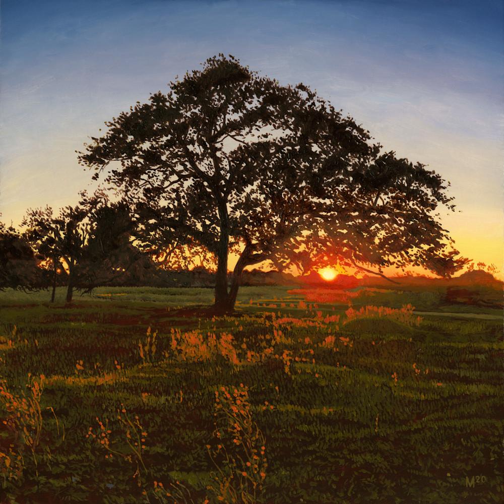 Post oak clean ydugw8