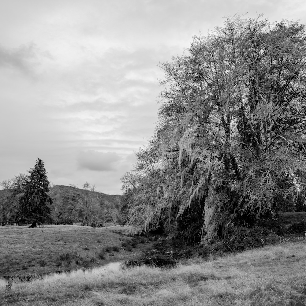 Tree pasture brooklyn washington 2020 dkjeib