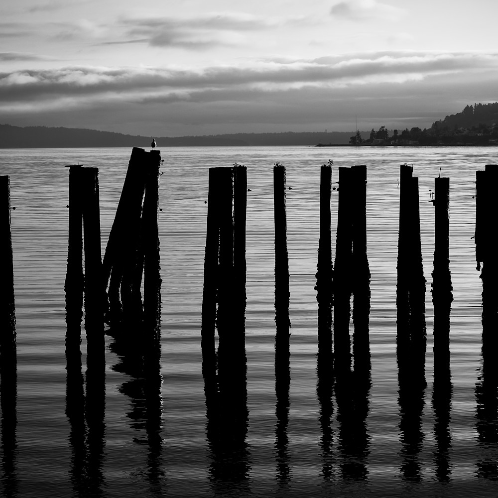 Old pilings on puget sound tacoma washington august 2013 qmpbfd