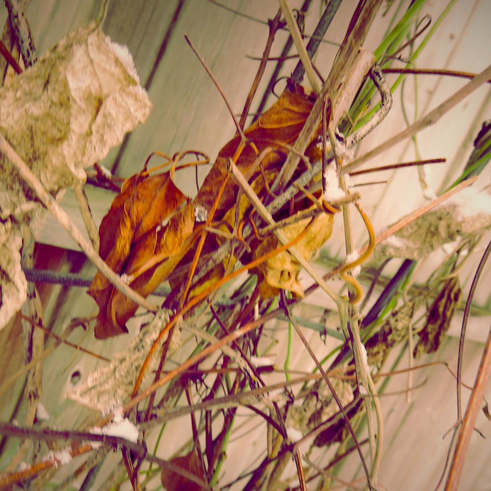 Dry fine vine pwoqiw