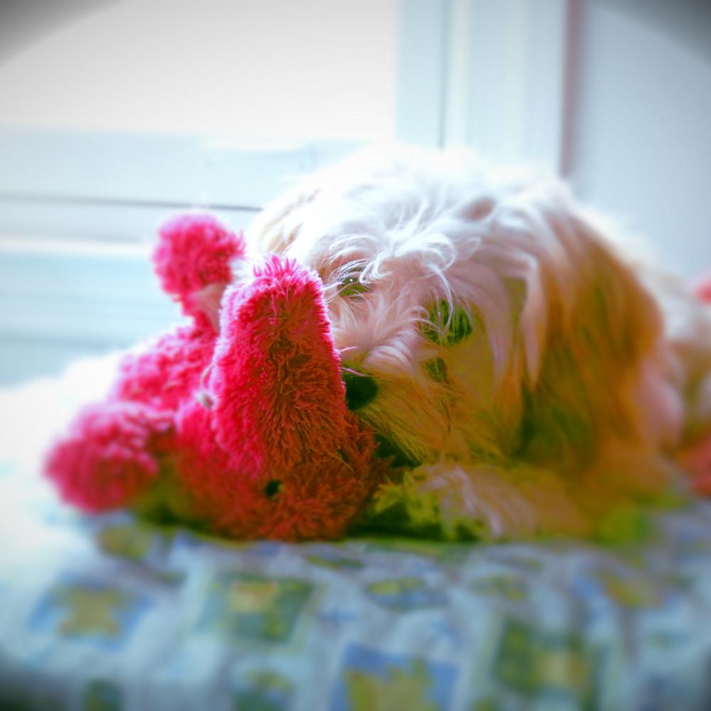 0010 my pink elephant yk4hve