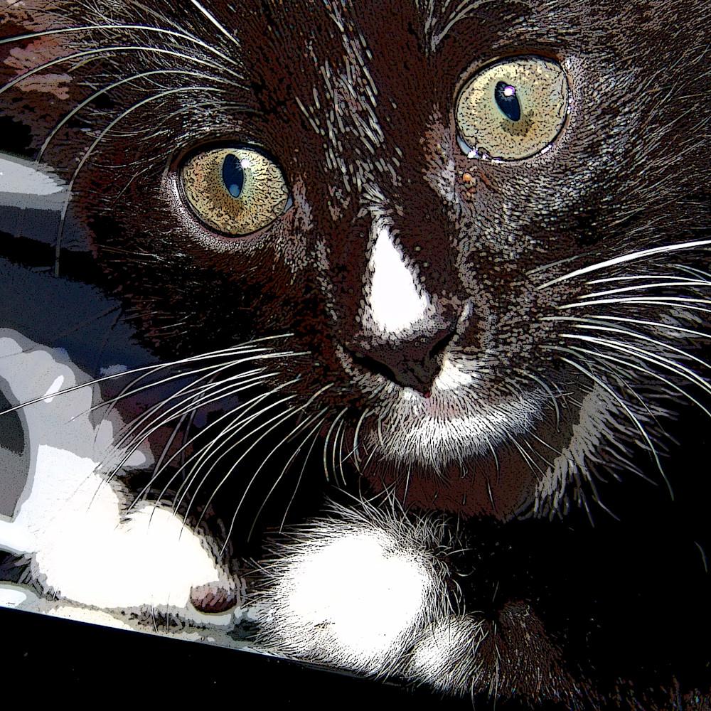 Kitty1 qhb3pm