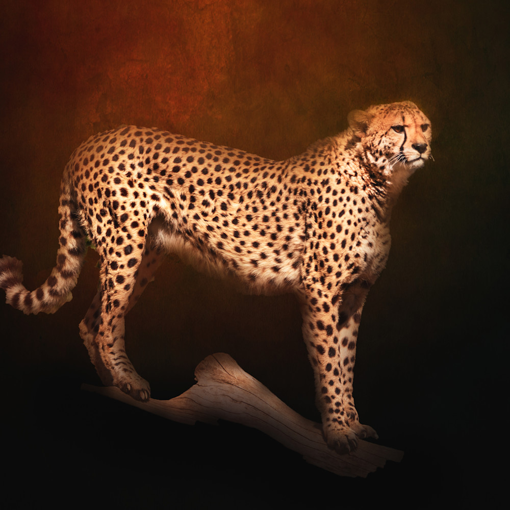 Cheetah on copper textured background mozfwd