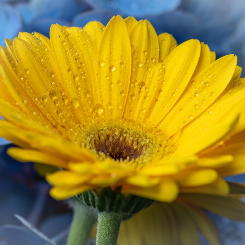 Raindrops on yellow flower ac2c3n