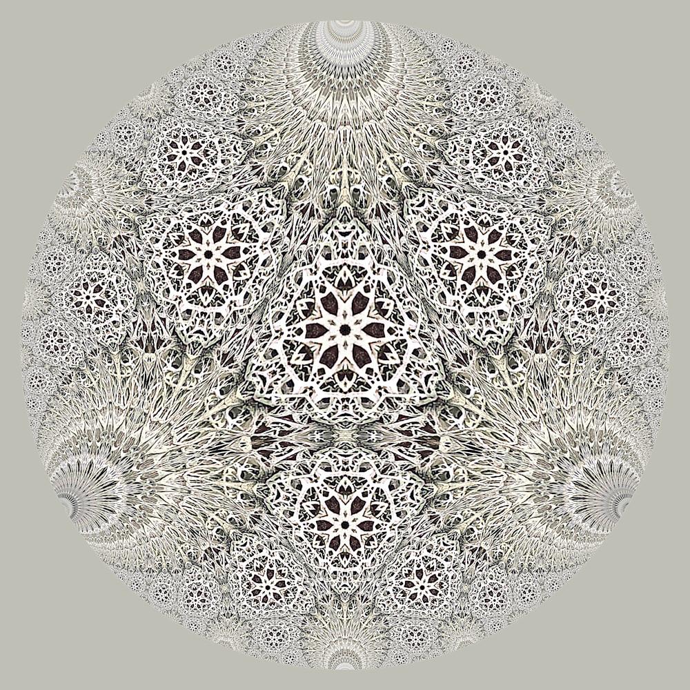 Hyperbolic lichen 1b o5inhc