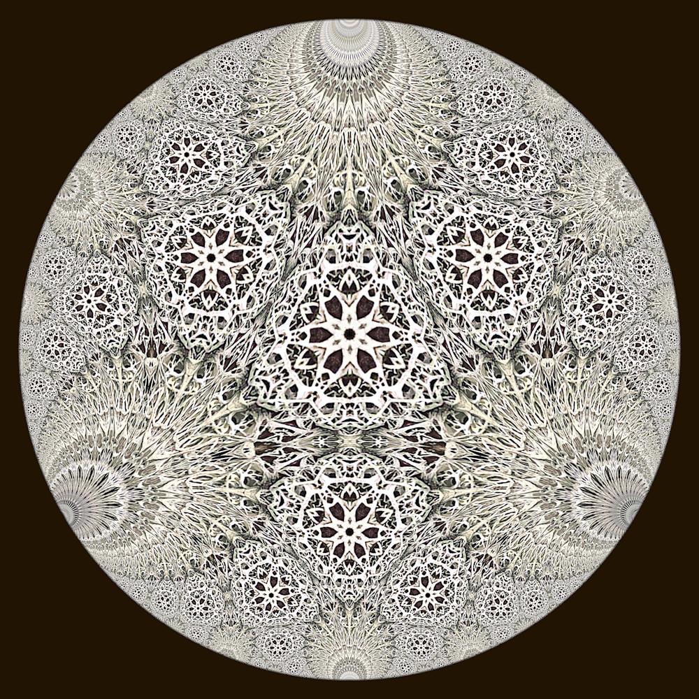 Hyperbolic lichen 1 eghrfc