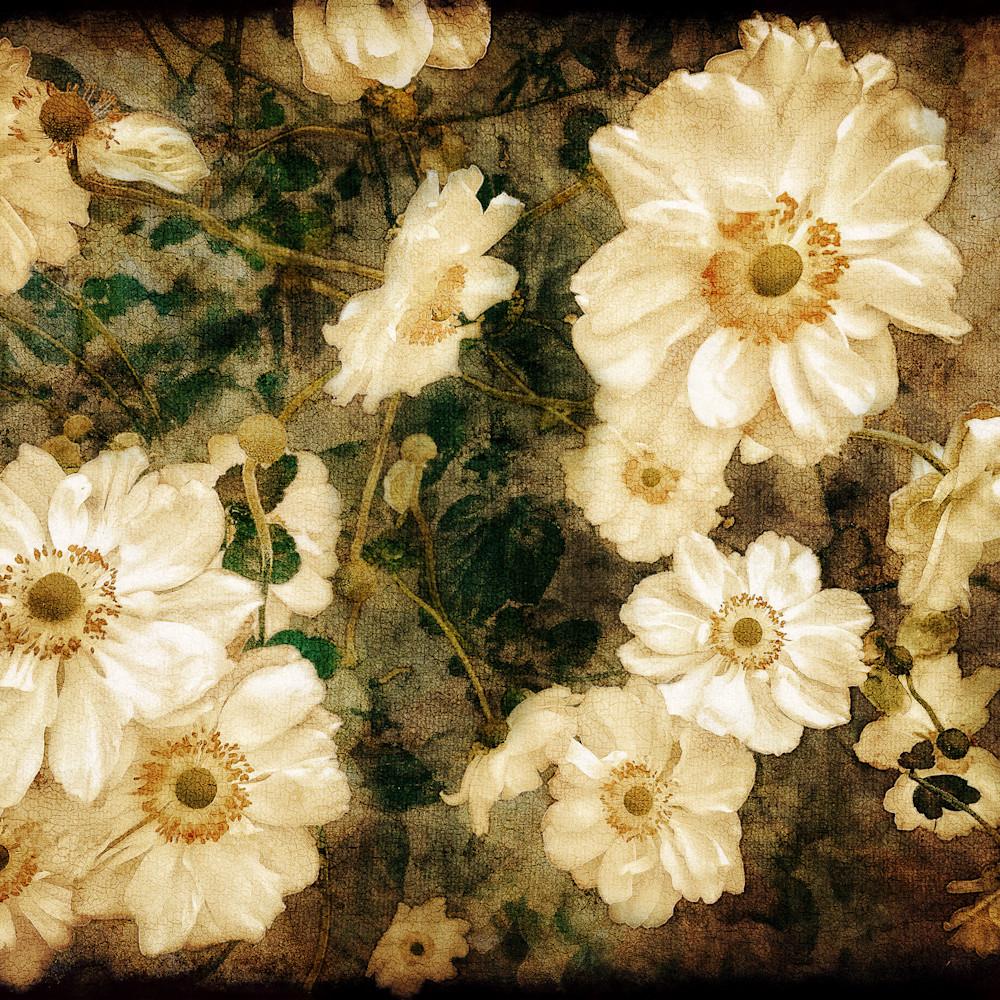 White flowers vernissage edit j6vvti