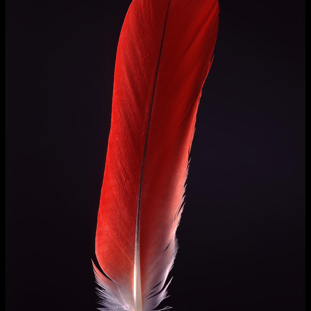 81 1410c tumba feather big as1ibm