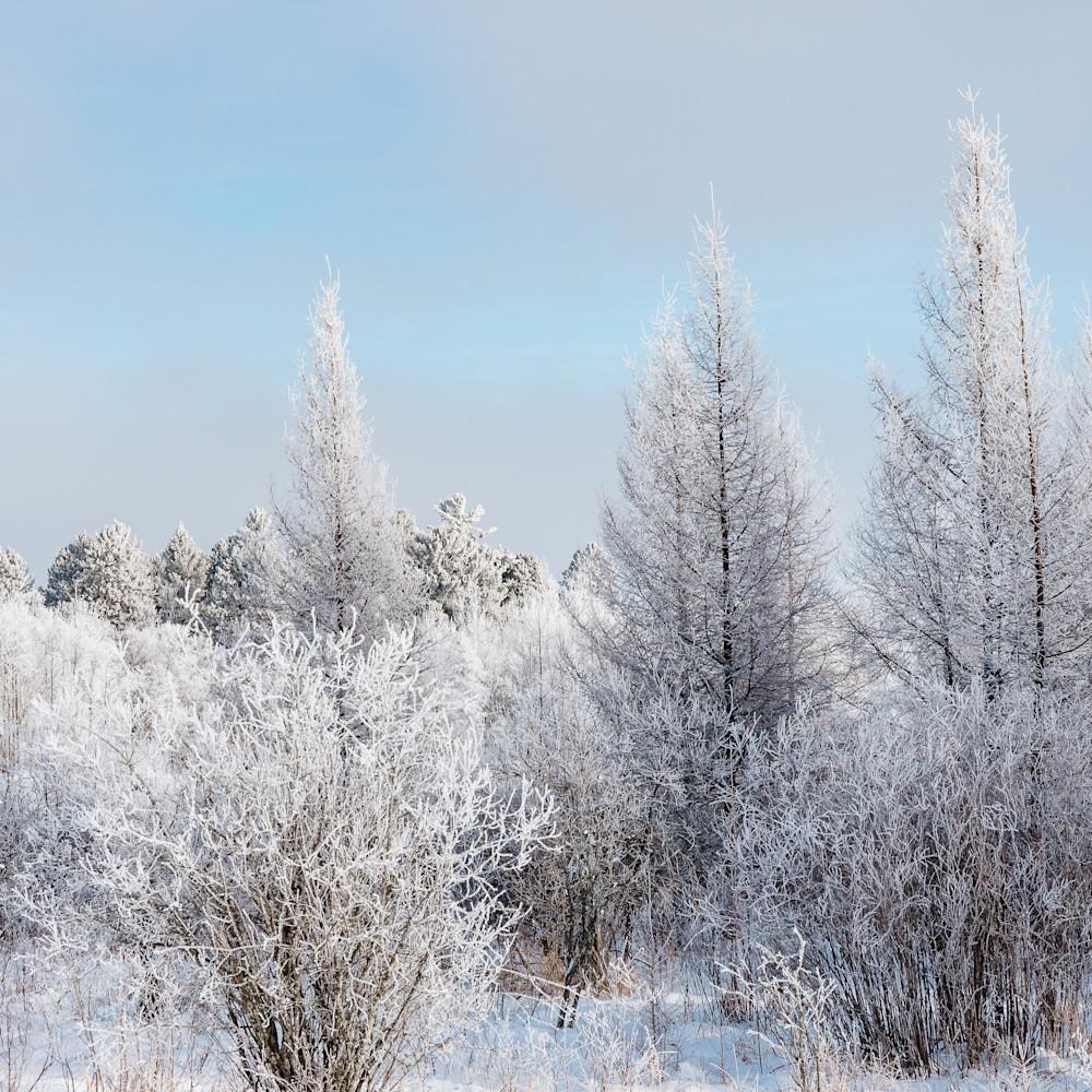 Winter field blue   h7ykxr