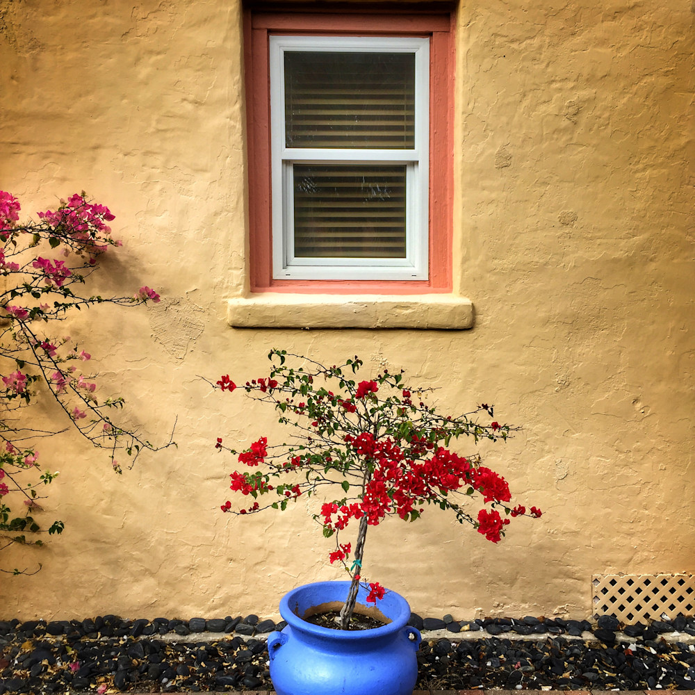A blue pot in stuart mas2021 rmdric
