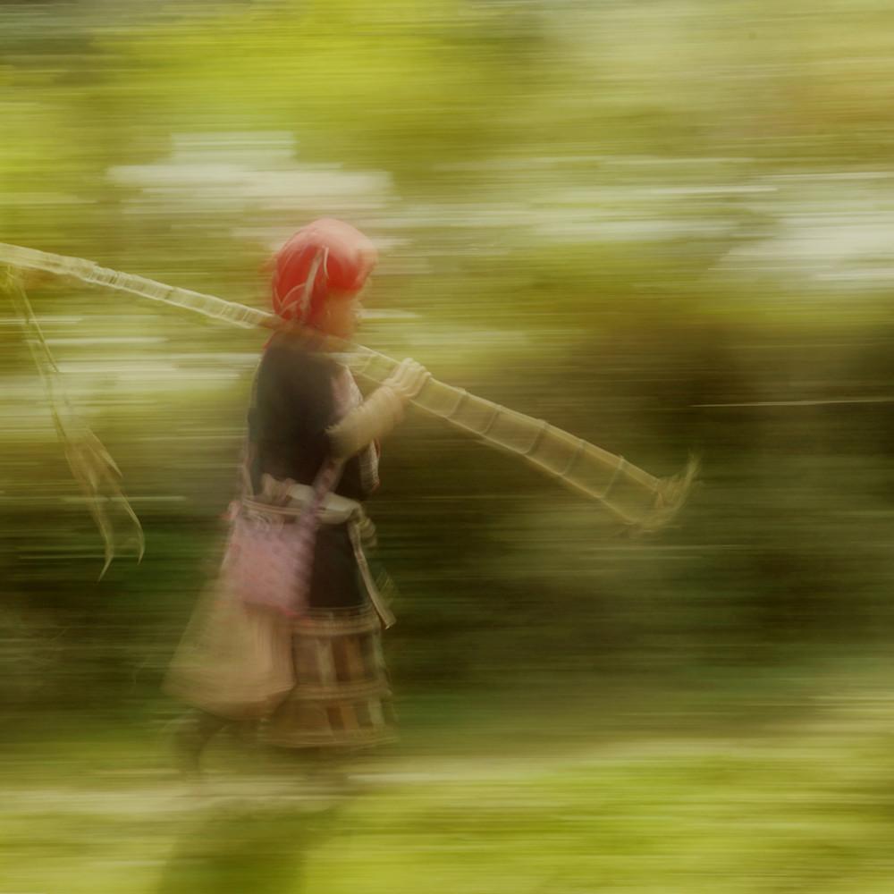 Sugar cane yu4fxv