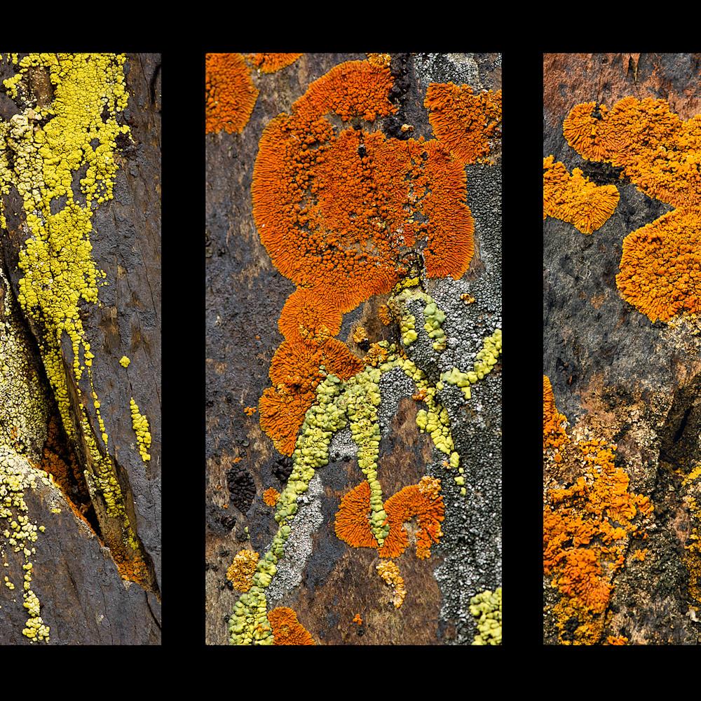 Felice willat   lichen tryptich ubqr7a