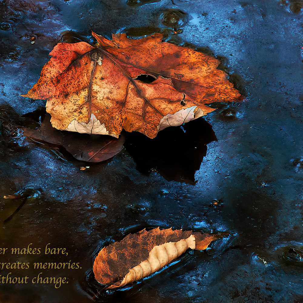 Leaf on frozen water hoiov0