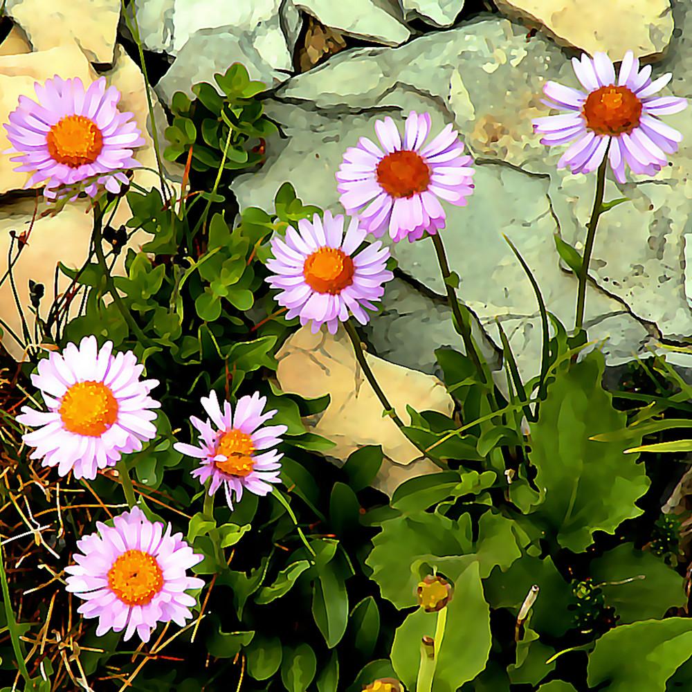 6000 flowers 9 dpokhn