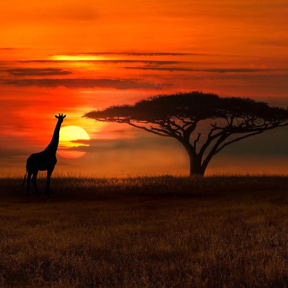 Serengeti ysjitd