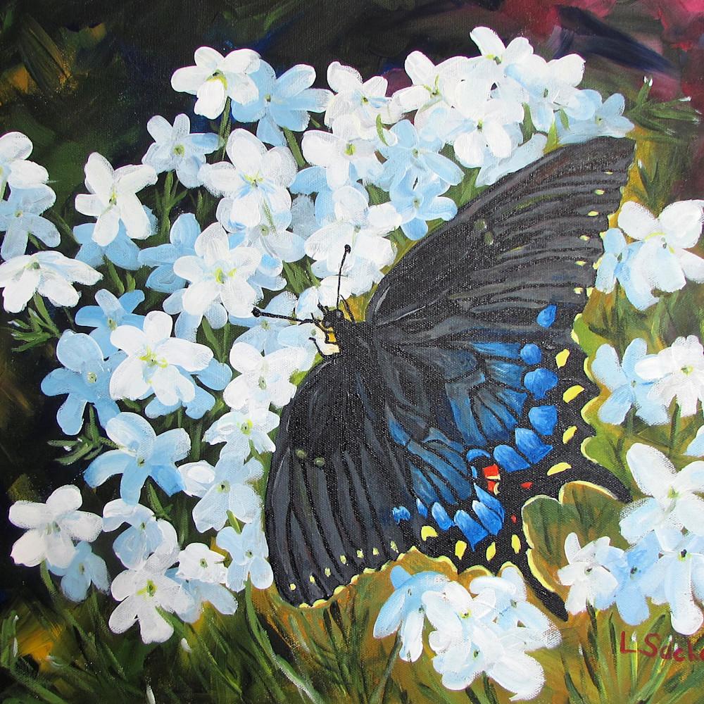 Black swallowtail 2 j17hrx