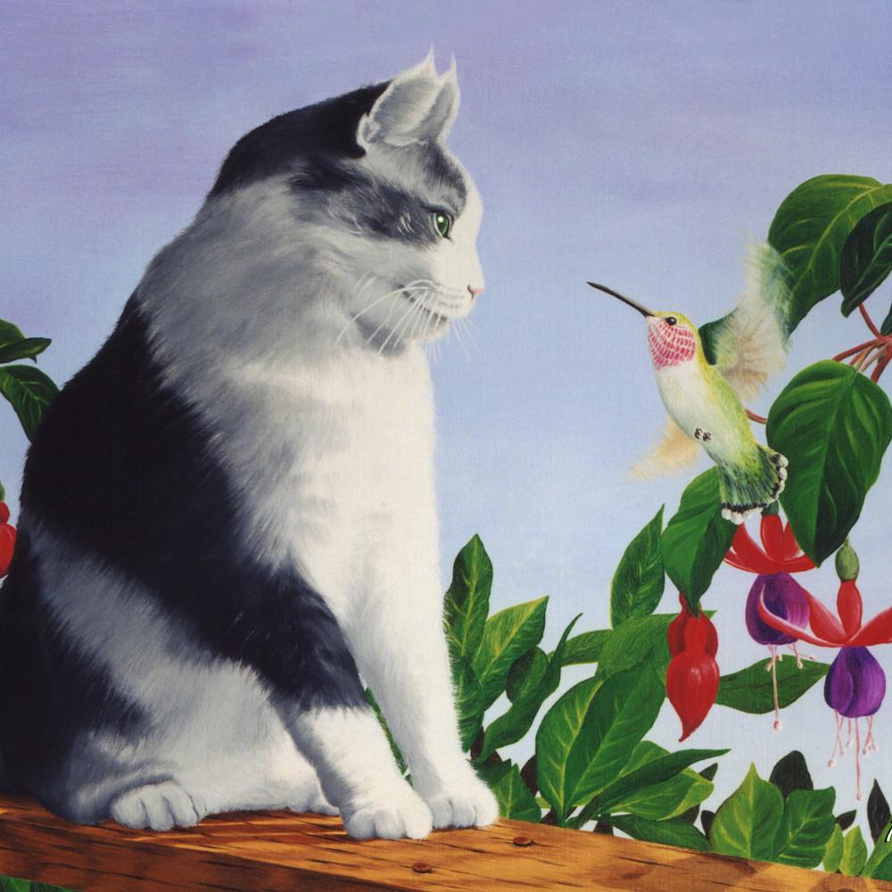 P8 cat and hummingbird c8xhjn