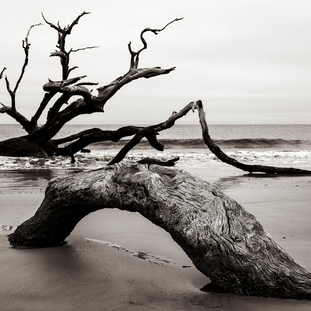 Andy crawford photography driftwood beach sea monster xohqtf