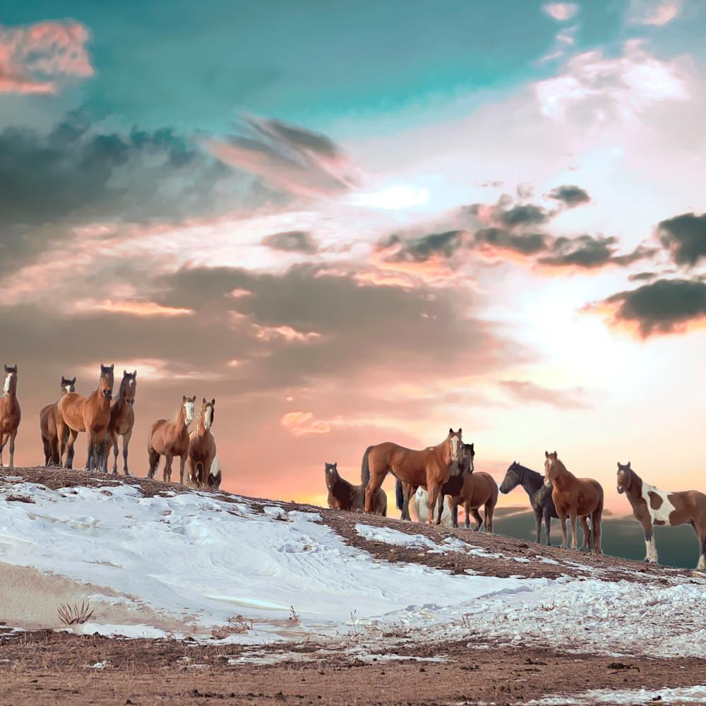 Attentive colorful wild horses dsc 6815 q0xk8q