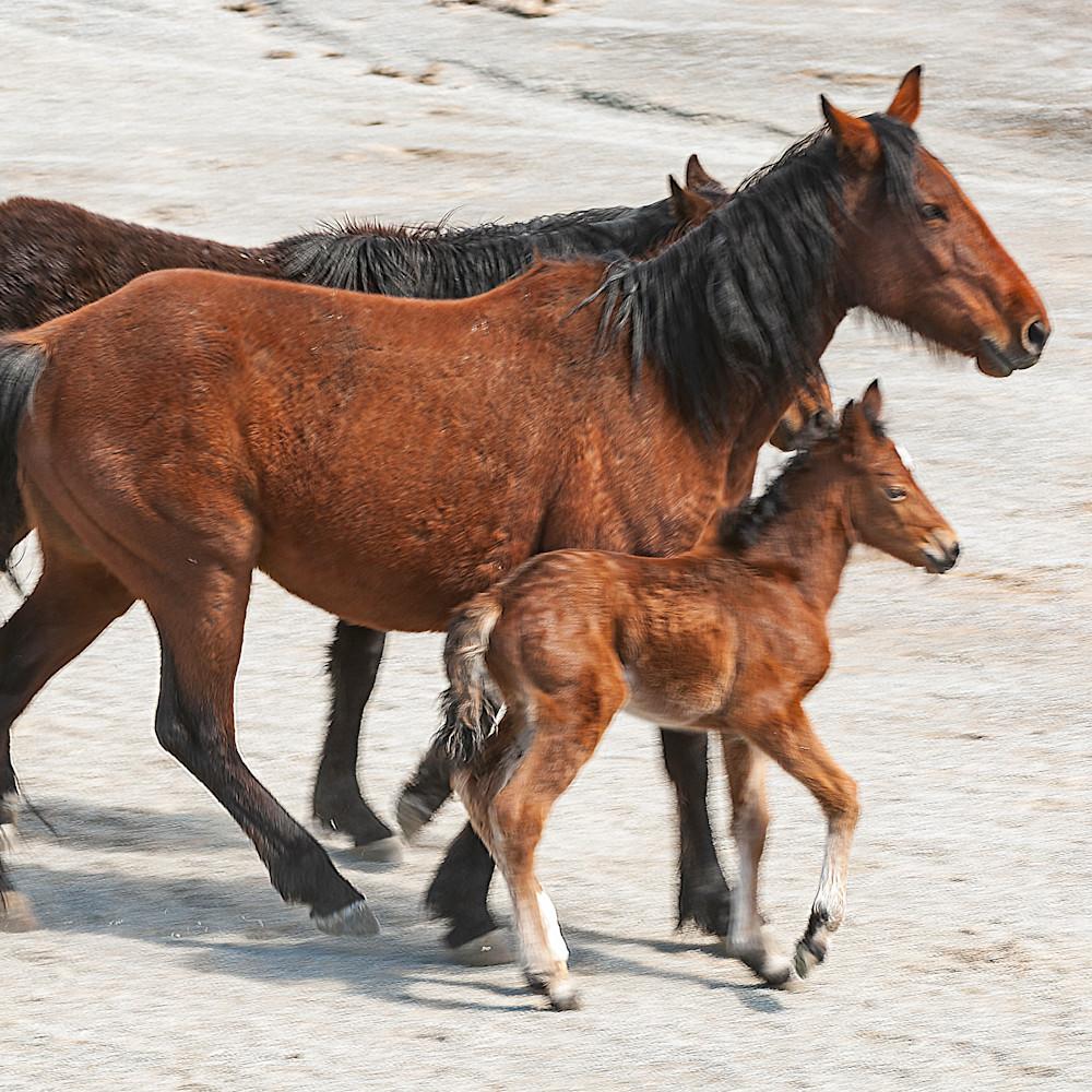 Herd with newborndsc 0169 xbj7qi