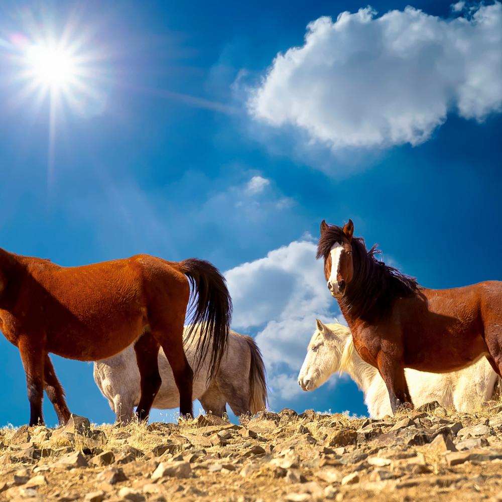 Ridgeline wild horses dsc 2451 m039o5
