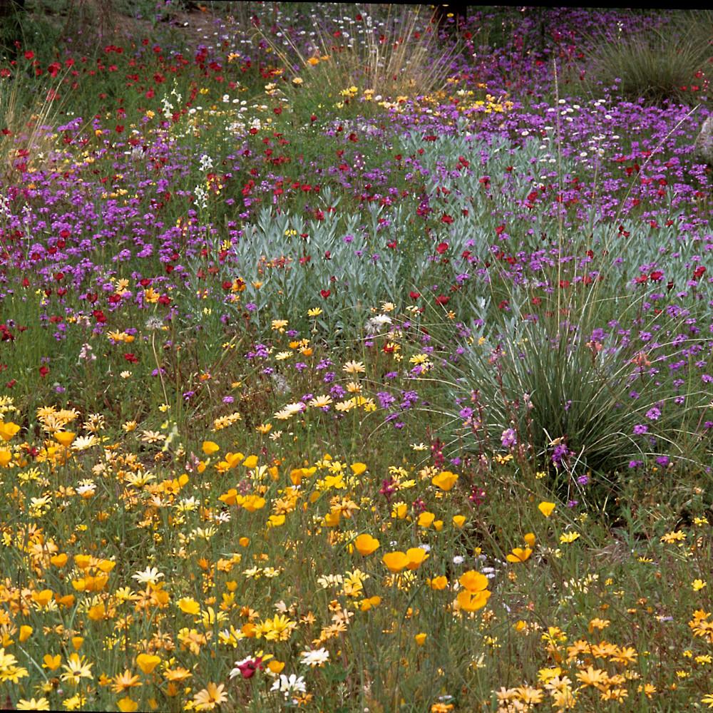 Desert bloom bjd2ov