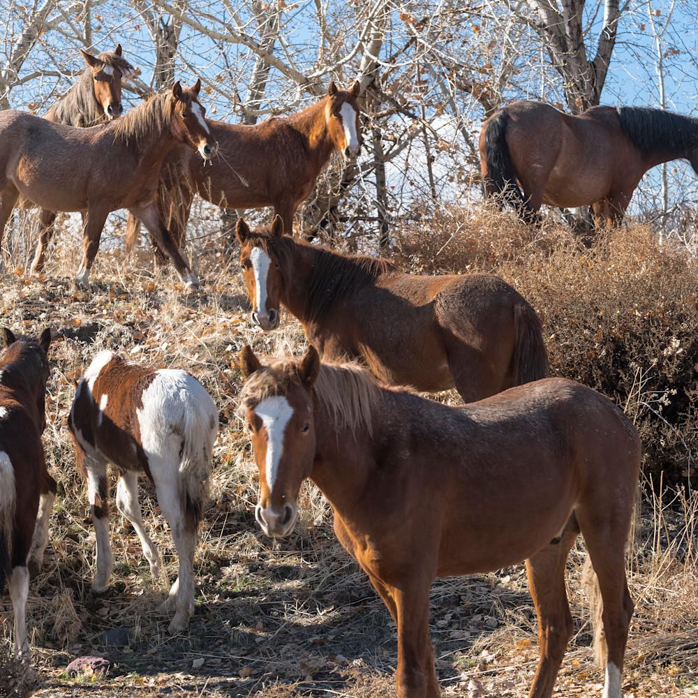 Wild horses in trees aijkz1