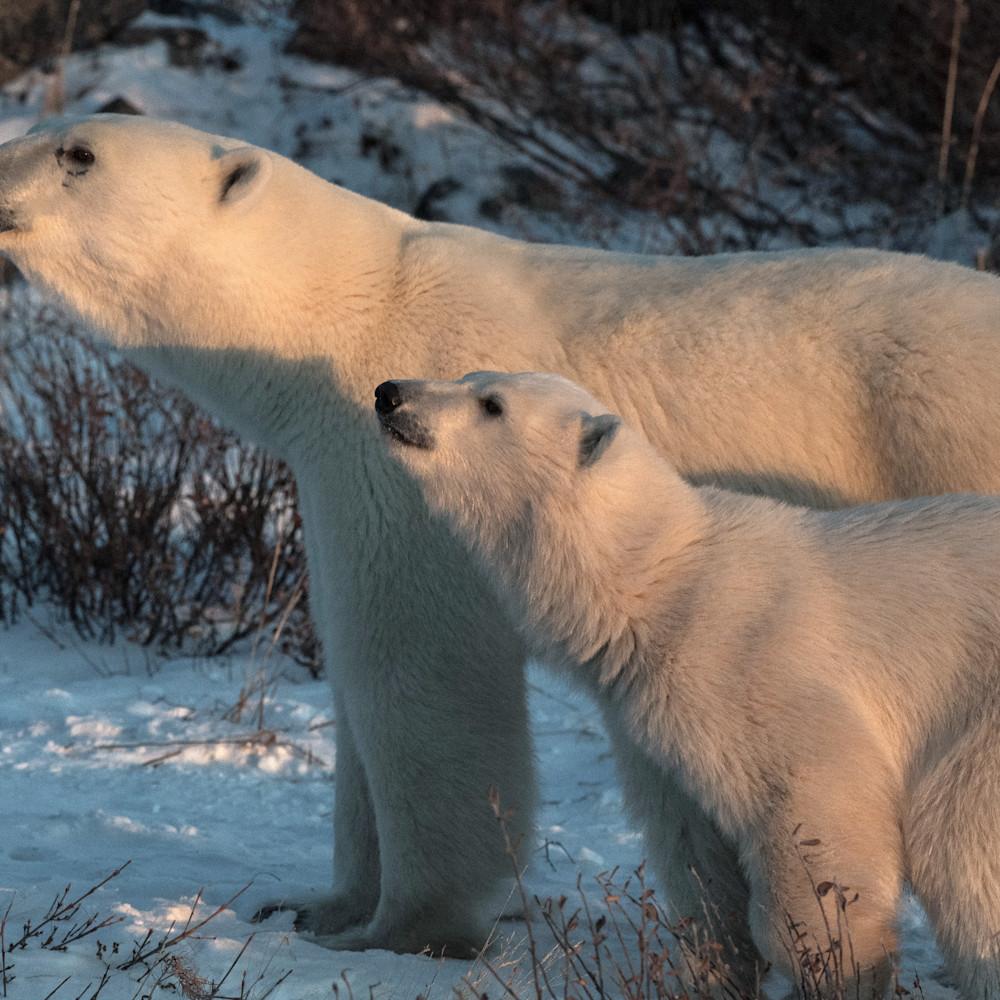 Closeup mom and cub sxbexb