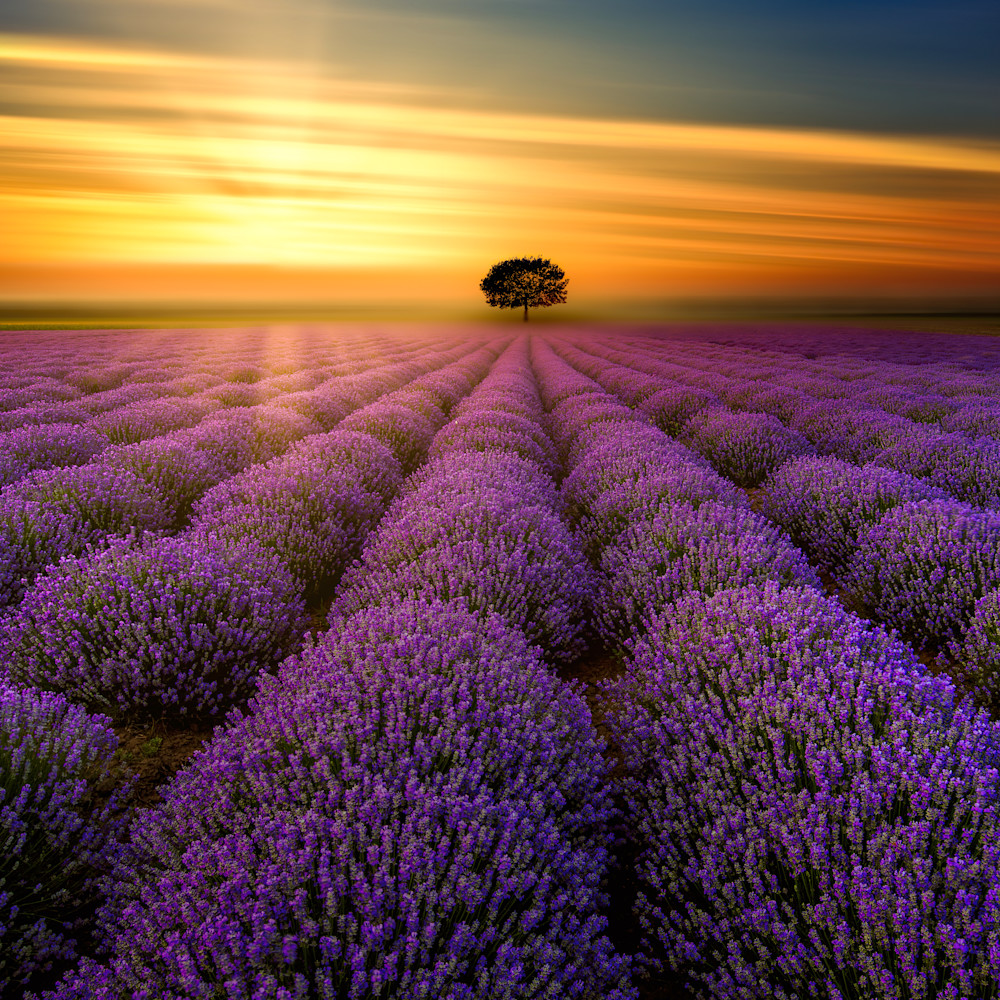 Sunset in provence o05qus