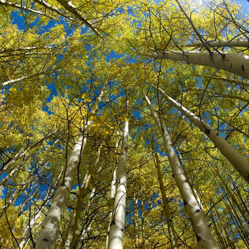 Aspen grove ottsnt