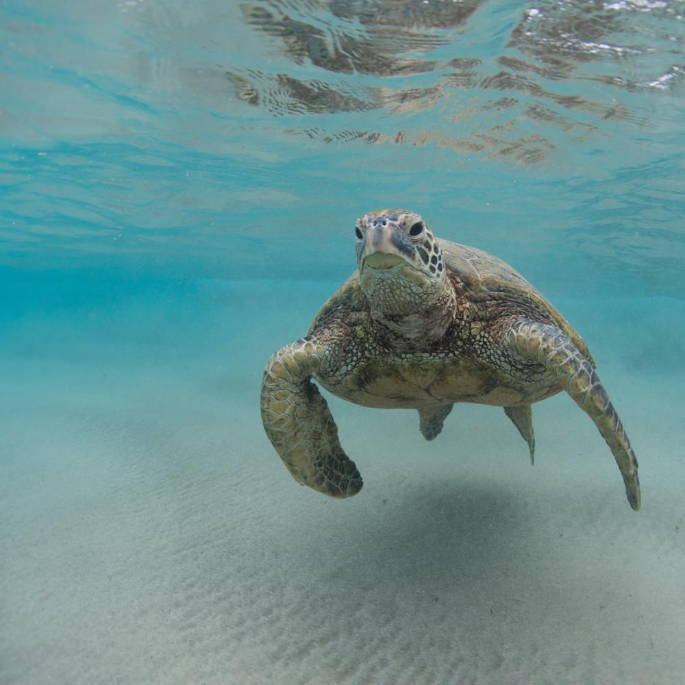 Undersea surfer fs0lpj