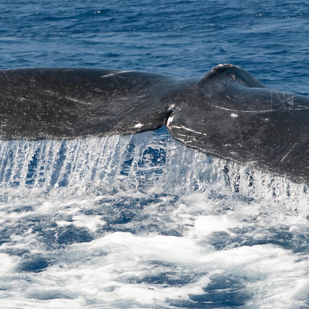 Whale tale tif q2tpcv