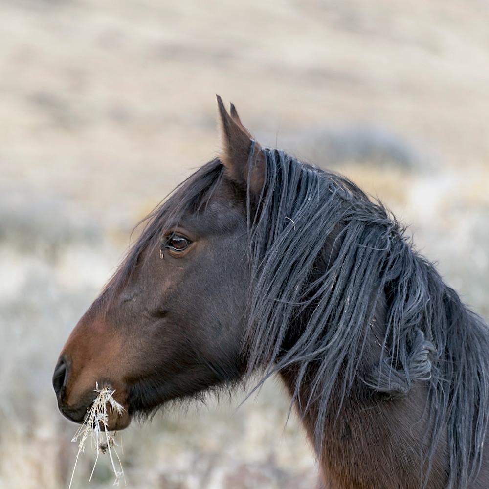 Stallion profile dmlcl1