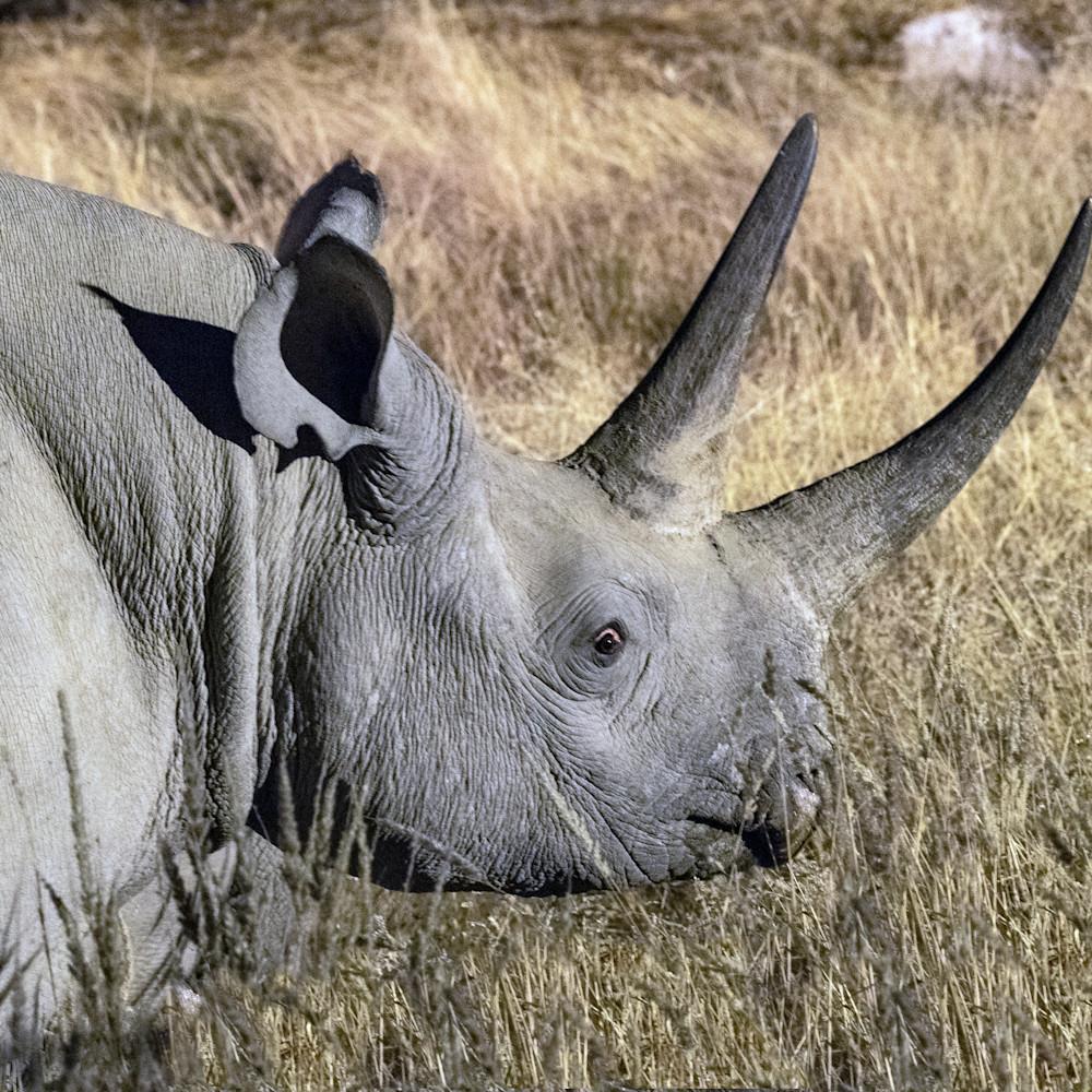 Black rhino face lbs 1262 pl5xt8